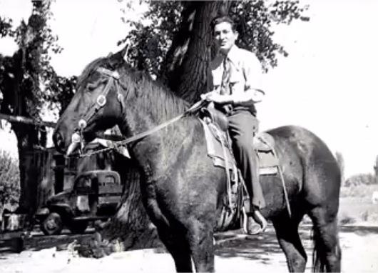 Bruno horse